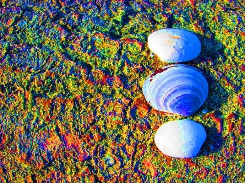 3 shells