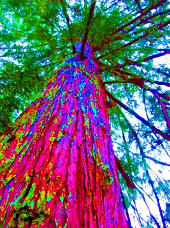 cedar tree colorful